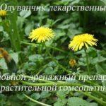 Одуванчик лекарственный – тараксакум